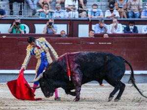 MADRID 6
